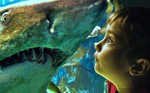水族館の成り立ちと歴史