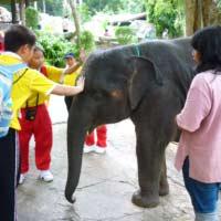 チェンマイ動物園象