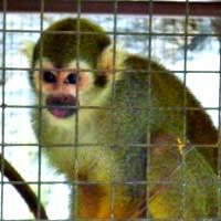 チェンマイ動物園猿