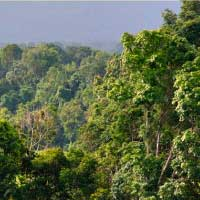 トゥンヤイ・ナレースワン野生生物保護区2