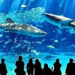 沖縄観光スポットと言えばココ!沖縄美ら海水族館攻略&人気のヒミツ