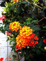 SnapCrab_NoName_2014-10-12_21-19-33_No-00