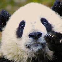 チェンマイ動物園2